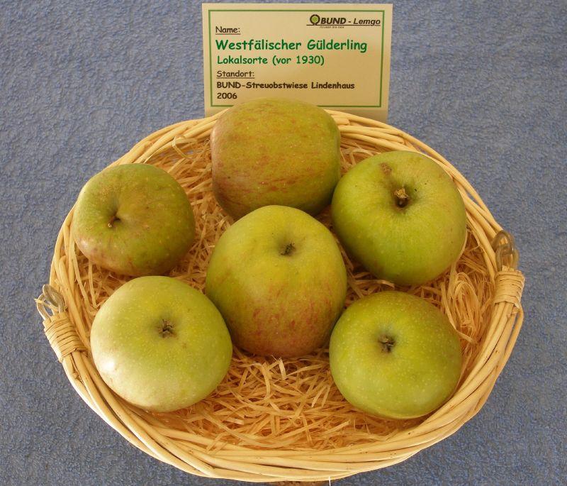 Apfelbaum Westfälischer Gulderling