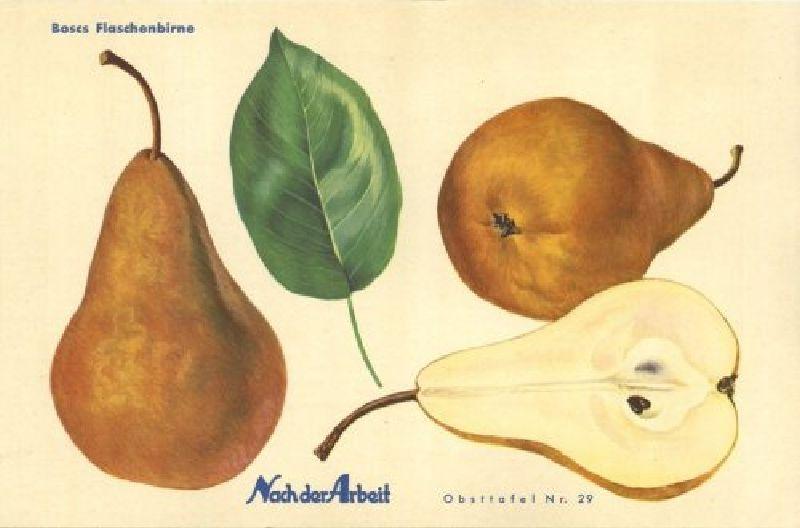 Birnbaum Boscs Flaschenbirne