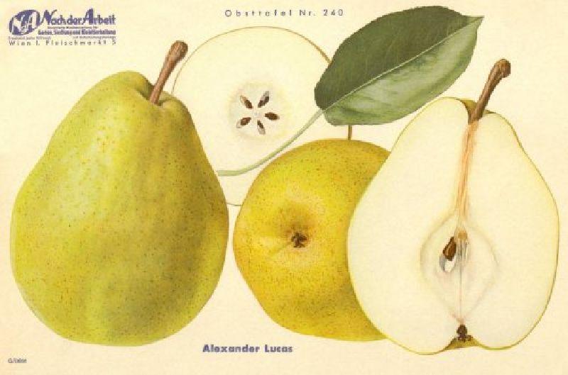 Birnbaum Alexander Lucas
