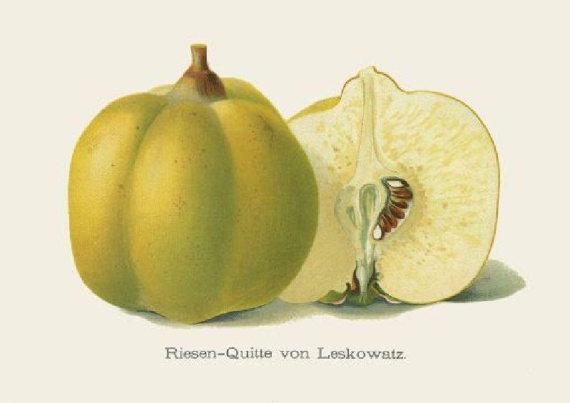 Apfelquitte Leskovac