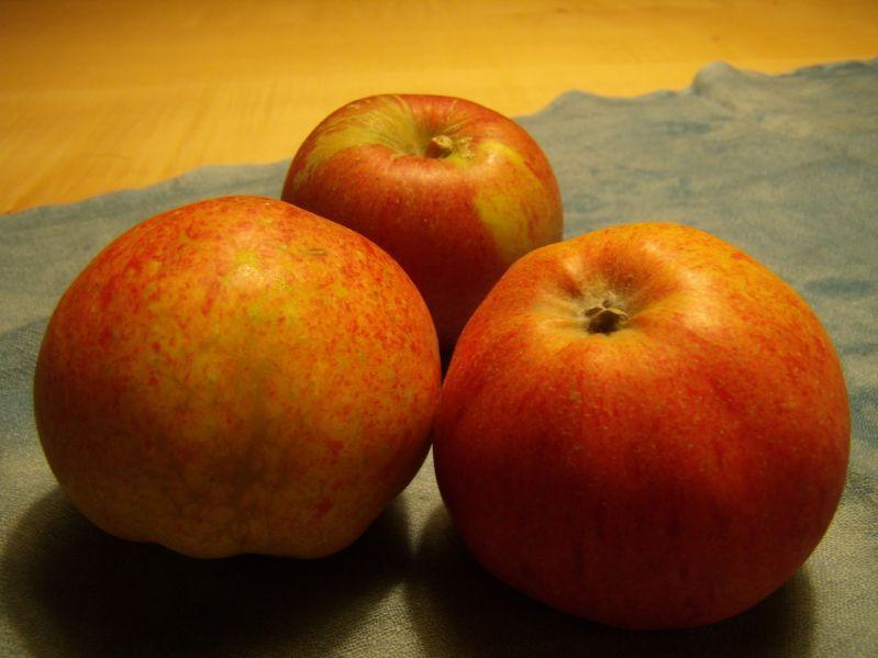 Apfelbaum Melrose