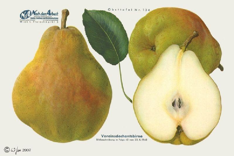 Birnbaum Vereinsdechant Birne