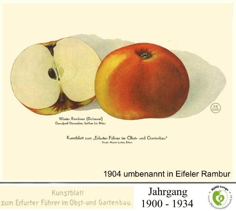 Apfelbaum Eifeler Rambur