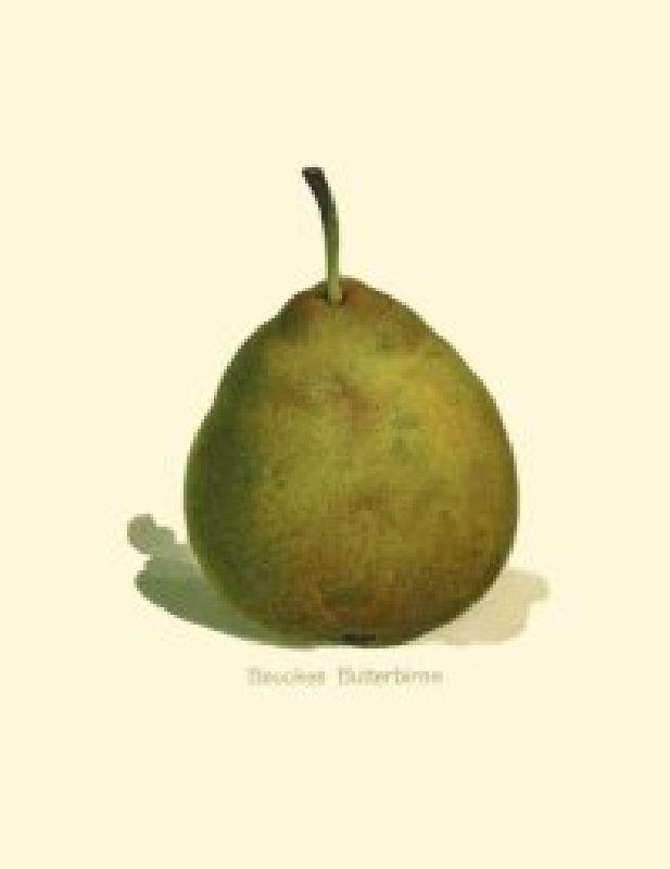 Birnbaum Beuckes Butterbirne