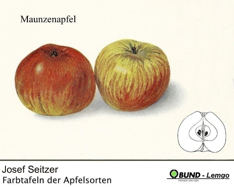 Apfelbaum Maunzenapfel