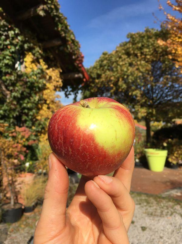 Apfelbaum Prinz Albrecht von Preußen