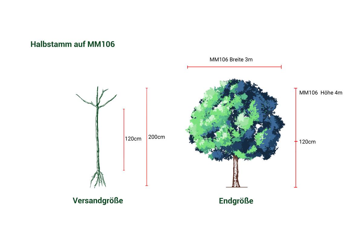 Apfelbaum Biesterfelder Renette