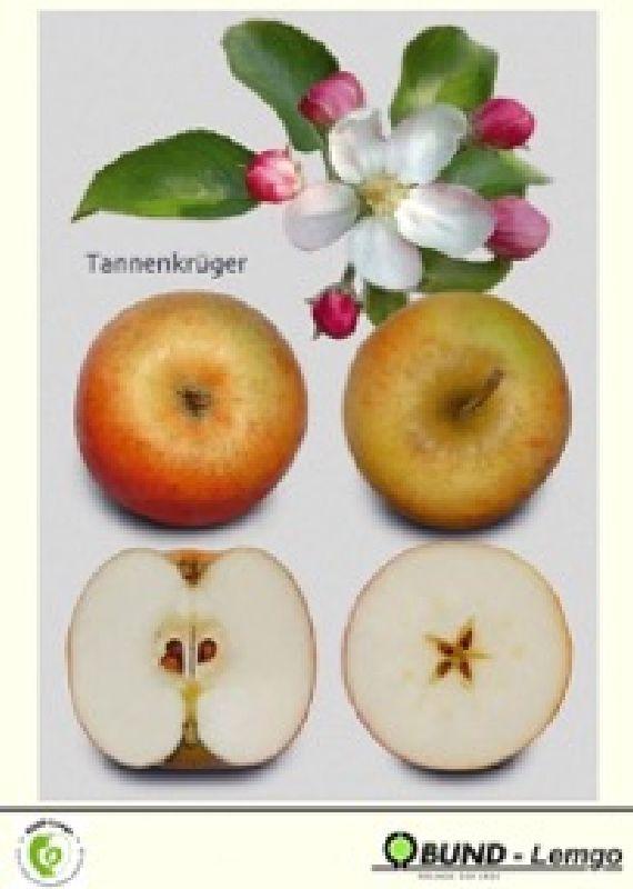 Apfelbaum Tannenkrüger