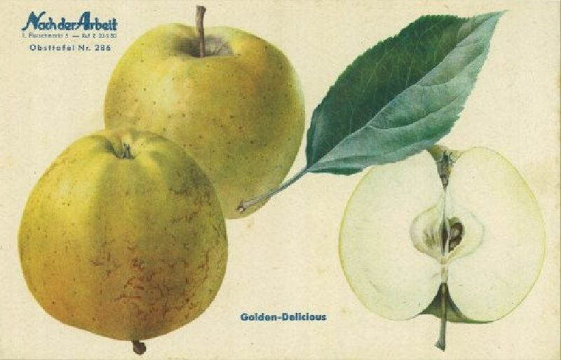 Apfelbaum Golden Delicious
