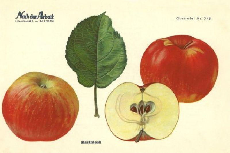 Apfelbaum Mc Intosh