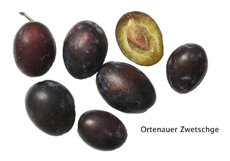 Zwetsche Ortenauer