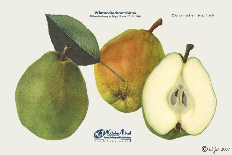 Birnbaum Winterdechant