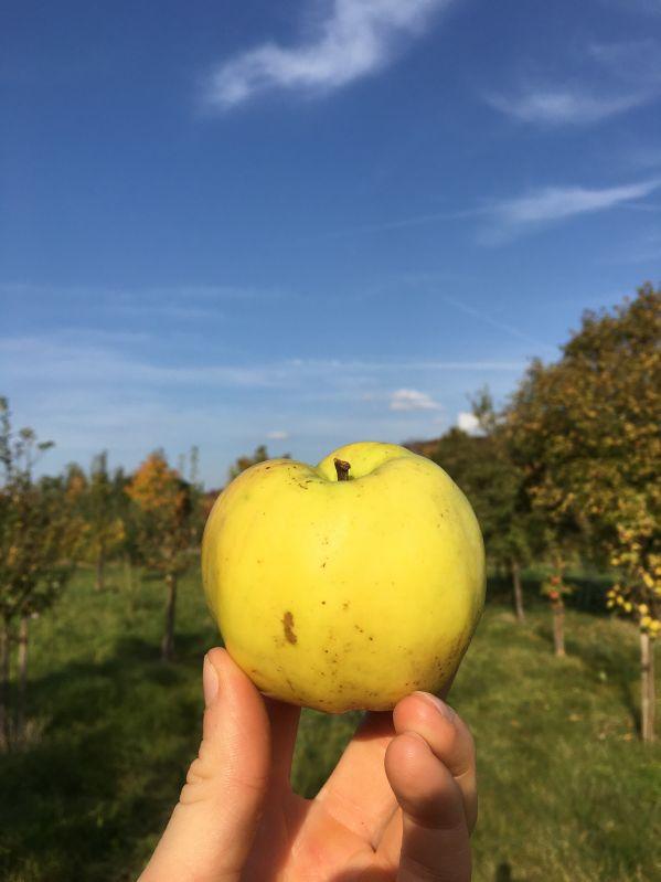 Apfelbaum Signe Tillisch