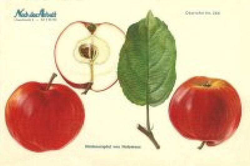 Apfelbaum Himbeerapfel aus Holovous