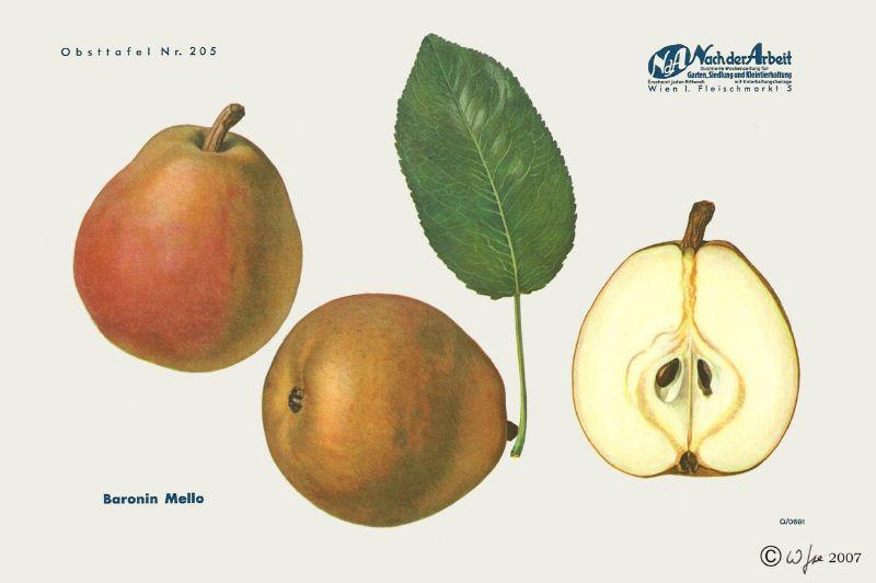 Birnbaum Baronin von Mello