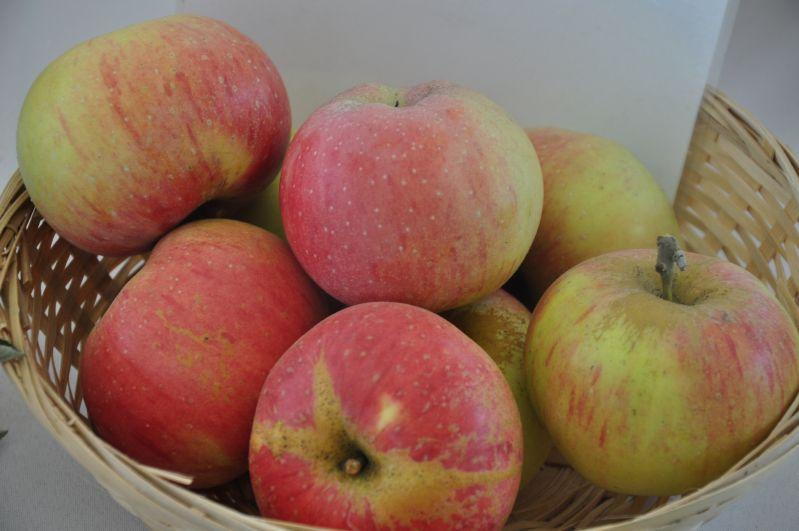 Apfelbaum Korbiniansapfel