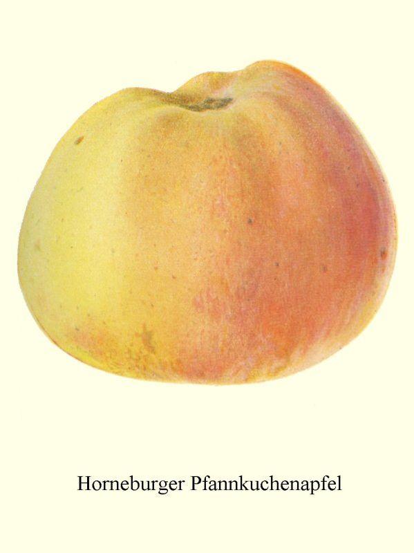 Apfelbaum Horneburger Pfannkuchenapfel