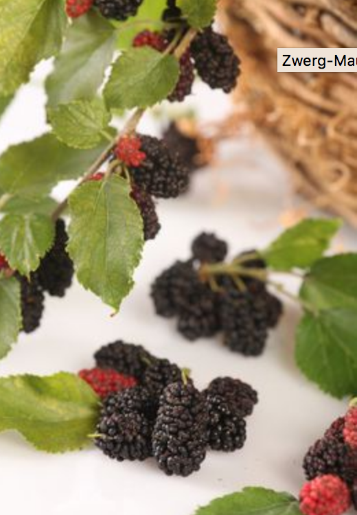 Maulbeere Mojo Berry
