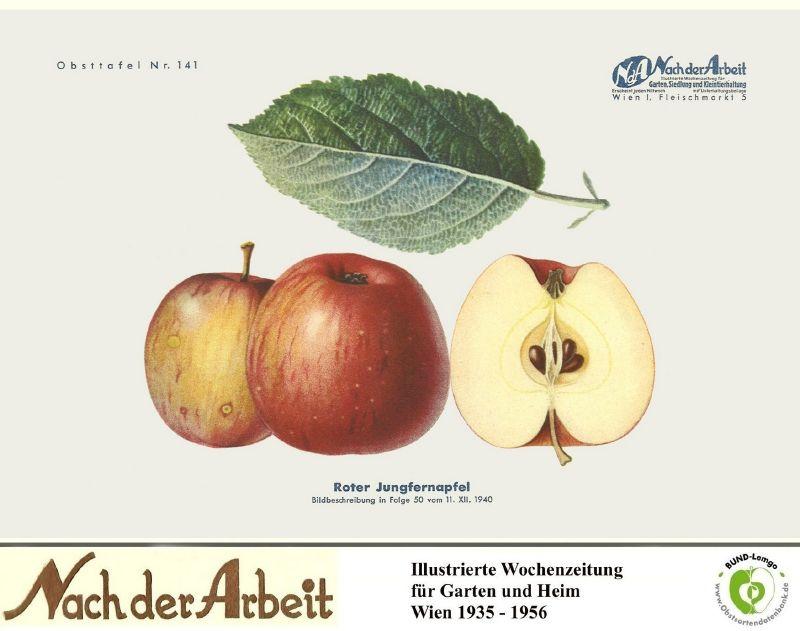 Apfelbaum Roter Jungfernapfel