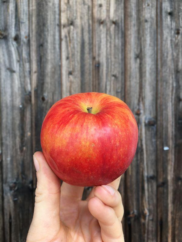Apfelbaum Ruhm aus Kirchwerder