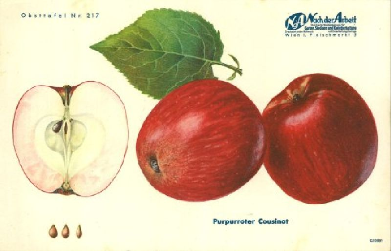 Apfelbaum Purpurroter Cousinot