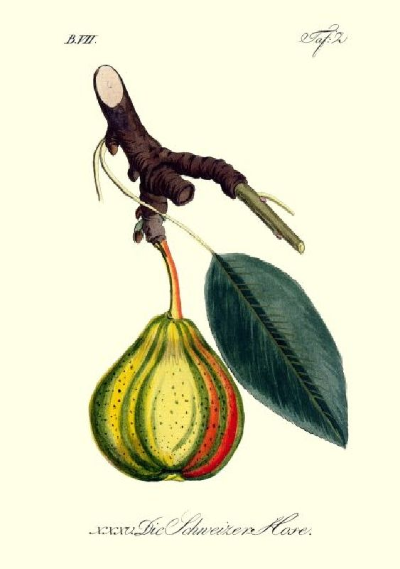 Birnbaum Schweizerhose