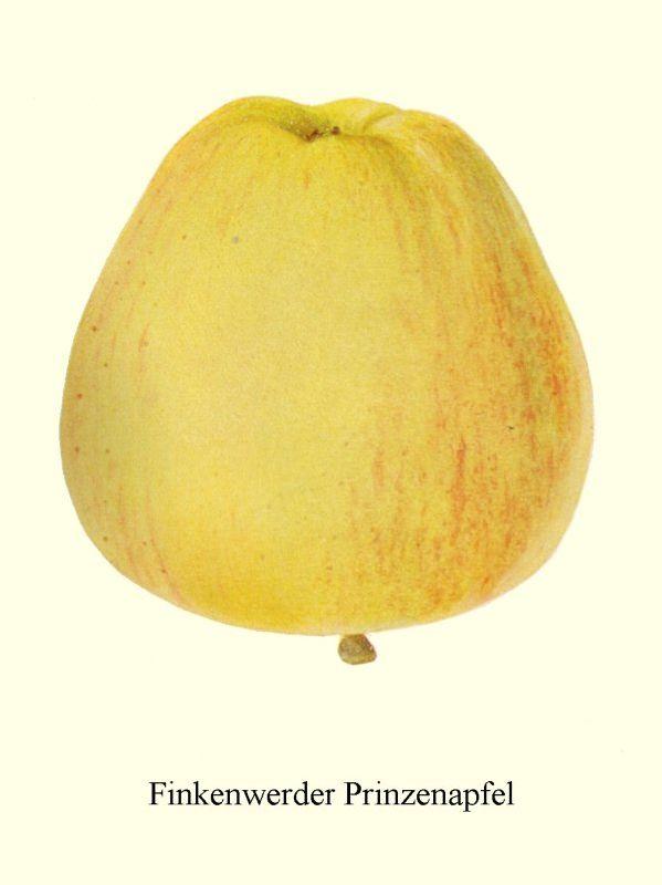 Apfelbaum Finkenwerder Herbstprinz