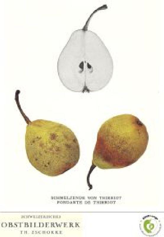 Birnbaum Schmelzende aus Thirriot