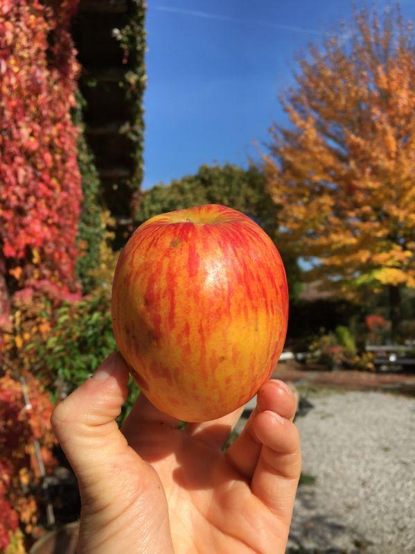 Apfelbaum Doppelter Prinzenapfel