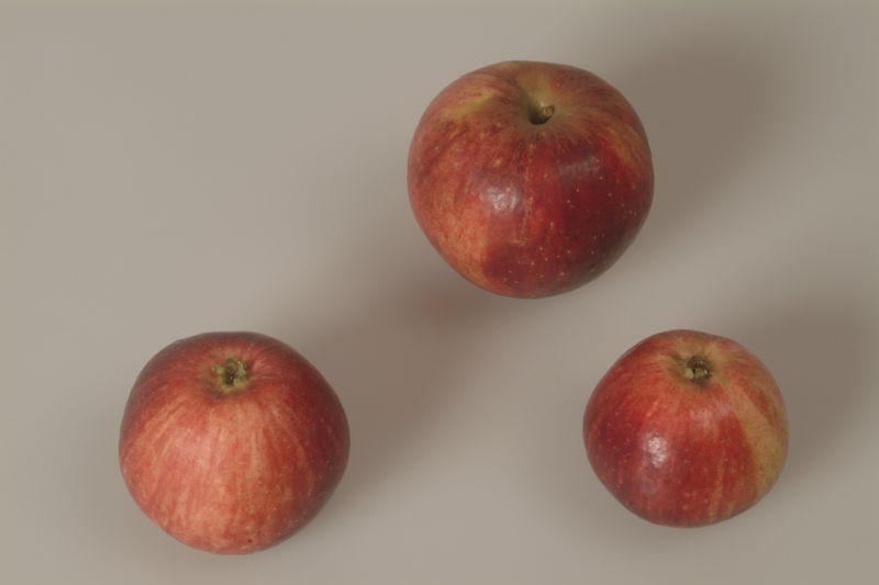 Apfelbaum Gewürzluikenapfel