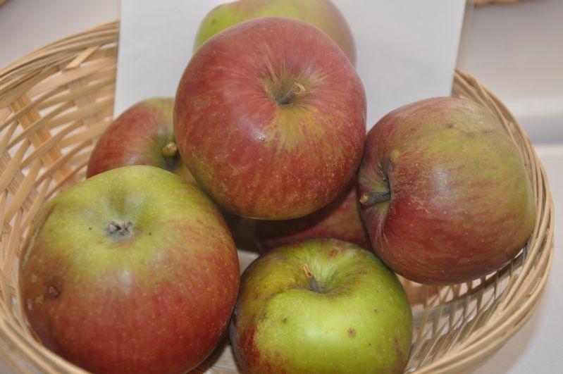 Apfelbaum Bischofsmütze nach Zorn