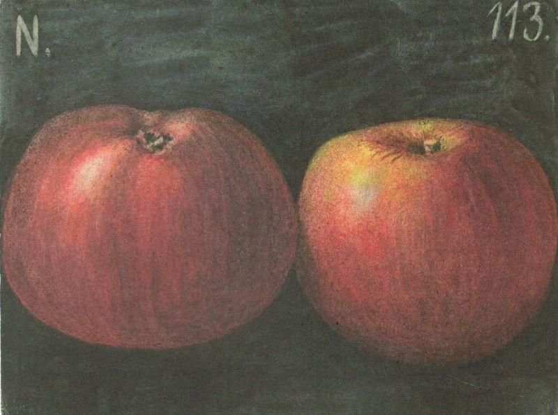 Apfelbaum Baya Marisa
